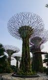 Boschetto di Supertree ai giardini dalla baia Immagini Stock Libere da Diritti