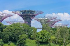 Boschetto di Supertree con cielo blu fotografie stock libere da diritti