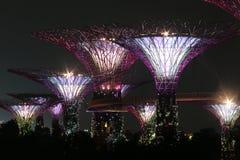 Boschetto di Supertree di notte a Singapore Immagini Stock Libere da Diritti