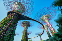 Boschetto di Supertree a Singapore Immagini Stock Libere da Diritti