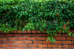 Boschetto, parete Fotografia Stock Libera da Diritti