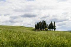 Boschetto toscano Fotografia Stock