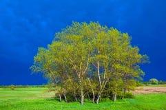 Boschetto verde Fotografie Stock