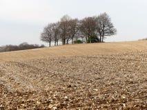 Bosco ceduo degli alberi nel campo arato, Latimer fotografie stock