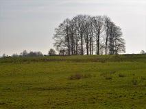 Bosco ceduo di legno in Inghilterra rurale Immagine Stock