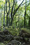 Bosco Di Sant ` Antonio δάσος, Abruzzo, Ιταλία Στοκ Φωτογραφίες