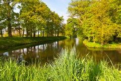 Bosco verde e frondoso Fotografia Stock