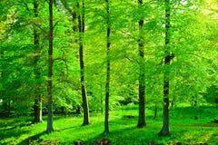Bosco verde e frondoso Immagini Stock