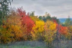 Bosco verde e frondoso nella stagione di caduta Fotografia Stock Libera da Diritti