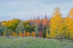 Bosco verde e frondoso nella stagione di caduta Fotografie Stock Libere da Diritti