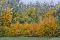Bosco verde e frondoso nella stagione di caduta Fotografia Stock