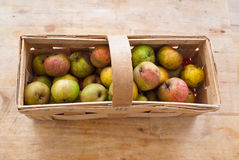 Boscop apples Royalty Free Stock Image