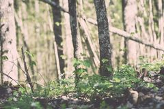bosdetails in de lente - uitstekend effect Royalty-vrije Stock Foto