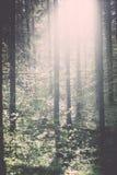 bosdetails in de lente - uitstekend effect Royalty-vrije Stock Afbeelding