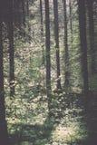bosdetails in de lente - uitstekend effect Royalty-vrije Stock Fotografie