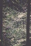 bosdetails in de lente - uitstekend effect Royalty-vrije Stock Foto's