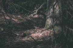 bosdetails met boomboomstammen en groen gebladerte in de zomer - de uitstekende retro film ziet eruit stock afbeeldingen