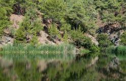 Bosdiebomen in een meer worden weerspiegeld Royalty-vrije Stock Afbeelding