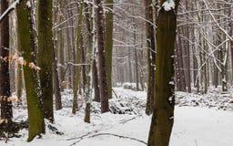 Bosdiebomen met sneeuw, de winterscsnery worden behandeld Royalty-vrije Stock Foto's