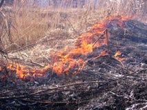 Bosdiebrandvlammen over droog grasgevaar worden uitgespreid royalty-vrije stock afbeeldingen