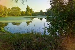 Bosdiemeer met eendekroos wordt overwoekerd Bomen en gras langs de kusten van het meer royalty-vrije stock foto