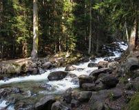 Bosdiewaterval en rotsen met mos wordt behandeld stock foto's