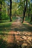 Bosdieweg door verse groene de lentekleuren wordt omringd stock foto