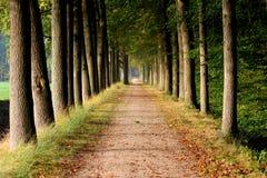 Bosdieweg met eikenbomen wordt omringd Royalty-vrije Stock Afbeelding