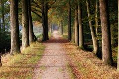Bosdieweg met eikenbomen wordt omringd Royalty-vrije Stock Afbeeldingen