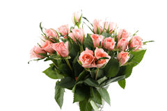 bosen rozen Arkivfoton