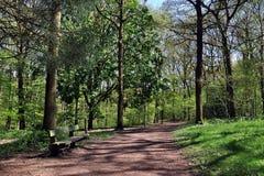 Bosgangen door de bomen Royalty-vrije Stock Foto