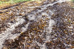 bosgebladerte gelijke grond stock fotografie