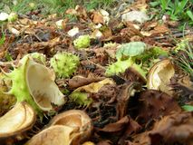 bosgrond Royalty-vrije Stock Afbeeldingen