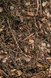 Bosgrond met kegels Achtergrond, Textuur royalty-vrije stock foto's