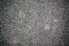 Bosgrondtextuur met mos Achtergrond royalty-vrije stock afbeeldingen