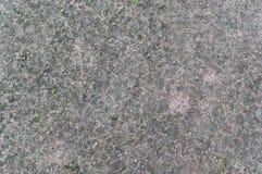 Bosgrondtextuur met mos Achtergrond stock afbeeldingen