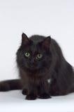 Boshafte Katze Stockfoto