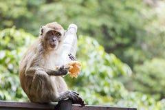 Boshafter Affe, der gestohlene Einzelteile hält Lizenzfreie Stockbilder