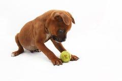 Boshafter Brown-Boxer-Welpe, der mit einem grünen Ball spielt Lizenzfreie Stockfotos