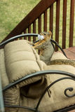 Boshaftes Hinterhofeichhörnchen Stockfoto