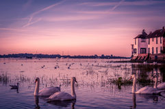 Bosham harbour. Sunset over Bosham Harbour with swans swimming close to the shore Stock Photos