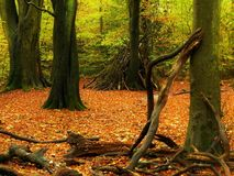 Boshol stock fotografie