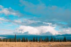 Boshorizonhemel Een dunne strook van bos op de hemelachtergrond Stock Afbeelding