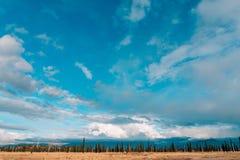 Boshorizonhemel Een dunne strook van bos op de hemelachtergrond Royalty-vrije Stock Fotografie