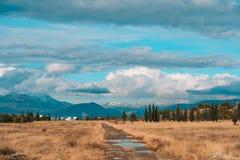 Boshorizonhemel Een dunne strook van bos op de hemelachtergrond Stock Foto's