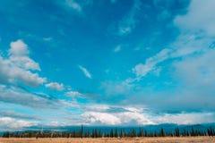 Boshorizonhemel Een dunne strook van bos op de hemelachtergrond Royalty-vrije Stock Afbeelding
