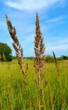 Bosje en grasrijk gebied Stock Foto