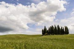 Bosje op heuvels Stock Foto