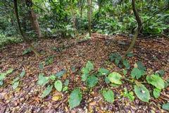 Bosje van berkbomen en droog gras Royalty-vrije Stock Afbeelding