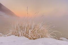 Bosje van bevroren gras Stock Foto
